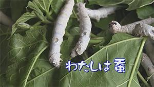 kaiko_01.jpg