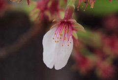 保山耕一カメラマン「奈良、時の雫」から学ぶ【桜】撮影の極意 その1