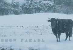【Views】『SNOW PARADE』2分45秒〜雪と共に暮らす人間の過酷さとともに描かれる動物たちの姿