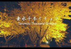 【Views】『垂水千本イチョウ』3分53秒~移動ショット中心に綴られた名物の銀杏並木のイメージムービー