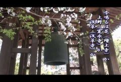 【Views】『増上寺の桜』7分45秒~インパクトのある画から始まるお参りがてらの増上寺訪問記