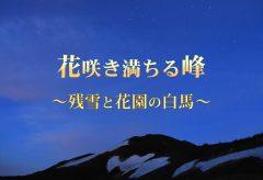 【Views】『花咲き満ちる峰~残雪と花園の白馬~』7分46秒~夏山の魅力を満喫! 雪渓や高山植物が織りなす雄大な光景をゆったりと描く