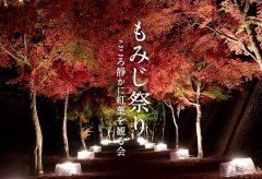 【Views】『もみじ祭り〜こころ静かに紅葉を観る会〜』58秒~心静かにというコンセプトで、カメラはしっとりと宵闇の紅葉を追う。 昼間とはまた違った紅葉の陰の魅力が顔を出す