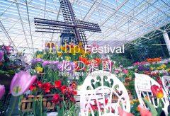 【Views】『花の楽園 フラワーパークかごしま〜Tulip Festival〜』3分18秒~淡い日本の春の花とは対照的な原色の花が迎えてくれる