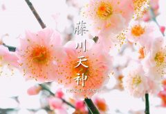 【Views】『藤川天神〜梅の香かおる頃〜』3分14秒~梅咲く春の日の名所訪問。時おりのクローズアップにハッとさせられる