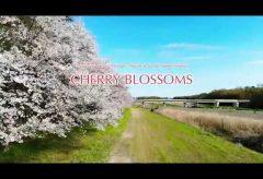 【Views】『CHERRY BLOSSOMS』28秒~カメラはスピード感溢れる動きでアップテンポで桜に迫っていく