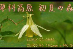 【Views】709 『蓼科高原 初夏の森』3分4秒~蓼科高原で短い夏を満喫する植物たちのオンパレードをマクロで描く