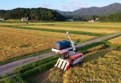 【Views】781『令和元年収穫』6分〜早くも実りの季節を迎えた一面の田んぼ。空から令和初の収穫を見守る