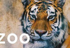 【Views】822『ZOO』2分46秒〜見るものに楽しい一時を与えてくれる場所。しかし、ひとたび動物たちの視点で見てみるとリアルな彼らの真剣なまなざしを感じだす