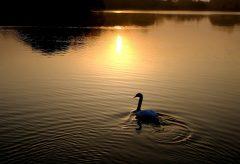 【Views】824『Healing Scenes 野鳥たちの楽園』3分33秒〜夜明けのタイムラプスから始まる鳥と自然の歳時記