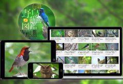 日本最大級の野鳥YouTube図鑑、デジタルアーカイブ『野鳥動画図鑑』が完成