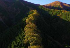 【Views】861『令和元年11月奈良県「ナメゴ谷の紅葉」』4分30秒〜秋の光線に照らされる雄大さはまるで渡り鳥になった気分
