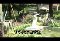 【Views】866-a『この世で1度だけ咲いた花』3分21秒〜およそ半世紀に1度だけ花を咲かせるという木に魅せられて日比谷公園に