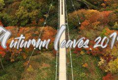 【Views】880『Autumn Leaves』3分26秒〜大吊り橋・けごんの滝・中禅寺湖と名勝が迫ってくる!!
