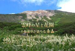 【Views】881『霊峰の星と花園~小梅蕙草が満ちる白山~』5分45秒〜さまざまなシーケンスはあまりにも美しく、夕景の斜光は心に何かが満たされる感じが伝わる