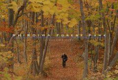 【Views】883『SHIROIWA FOREST PARK』2分30秒〜自分撮りも取り入れて美しい景色を描写。作者の趣味の世界をちょっと覗く