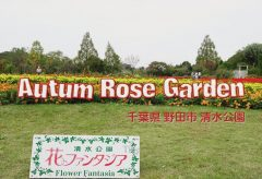 【Views】899『Autumn Rose Garden (千葉県野田市清水公園)』3分1秒〜カラーグレーディングを施してシックな画調で花々を魅せる