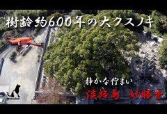 【Views】902『大くすに誘われて・・妙勝寺 探訪』3分14秒〜まるで時を忘れたような浮遊感を覚えるカメラがテンポに乗って進んでいく
