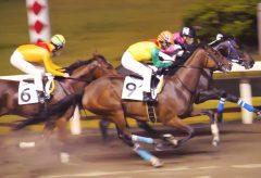 【Views】958『競馬』1分27秒〜夜の競馬場、重馬場を競走馬が泥を蹴散らして駆け抜けていく