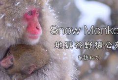 【Views】967『Snow Monkey』1分53秒〜なにげない仕草も愛らしい親子猿。じっと遠くを見つめる猿たちの眼差しはなにに向けられているのか?