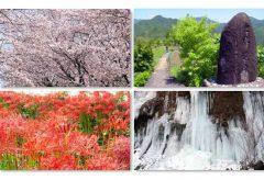 映像配信サービスの日本デジタル配信(JDS)と写真提供のアフロが業務提携