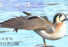 【Views】1102『鴨の水掻き』1分13秒〜鴨の姿を見ながら何を思う?