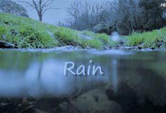 【Views】1106『Rain』2分7秒〜カエル目線で雨の日の情景を描く