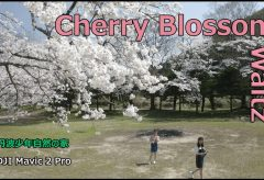 【Views】1108『Cherry Blossom Waltz』2分35秒〜ワルツの調べに乗せ満開の桜を愛でる