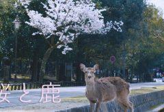 【Views】1112『2020年3月、奈良公園の風景と鹿たち』3分12秒〜観光客が減少した奈良公園の風景を撮影