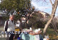 【Views】1117『梅の里』4分32秒〜春の日の梅の里を描く