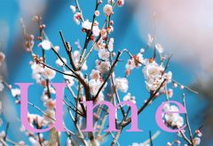 【Views】1121『Ume in Okurayama』1分31秒〜青空と梅のコントラスト、そして梅を鑑賞する人々が印象に残る