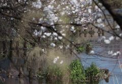 【Views】1148『Blue Birds』2分55秒〜小鳥の愛らしい仕草に癒される