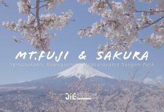 【Views】1157『Mt.Fuji & Sakura 2019, Japan 』4分30秒〜富士山と桜、日本の代名詞を様々な撮影ポイントから狙った労作