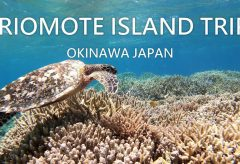 【Views】1171『Iriomote Island Trip』2分51秒〜西表島の海・マングローブ・自然、そしてマリンスポーツの旅の思い出