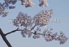 【Views】1178『Spring of Takada ~ 高田の春 ~』1分42秒〜閑散とした中にも今年の桜は我関せずと満開を咲き誇る