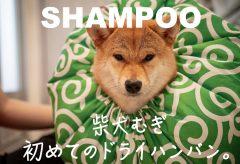 【Views】1201『shampoo』1分1秒〜柴犬むぎのシャンプータイム