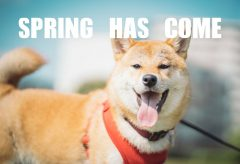【Views】1200『spring has come』1分2秒〜愛犬むぎとともに春のお散歩