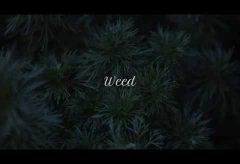 【Views】1215『Weed』1分33秒