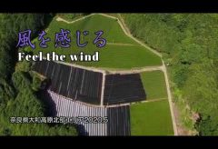 【Views】1217『風を感じる 奈良大和高原本部エリアのある茶畑にて 2020.5』3分6秒