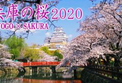 【Views】1220『Spring in HYOGO × SAKURA』2分31秒