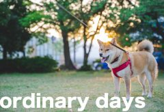 【Views】1300『ordinary days』2分15秒