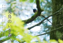 【Views】1301『サンコウチョウのいる森』1分2秒