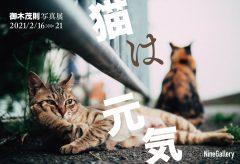 連載「映画の裏窓」の映画カメラマン 御木茂則さんの写真展「猫は元気」〜2月16日から21日まで