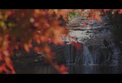 【Views】1477『秋音渓谷』2分6秒