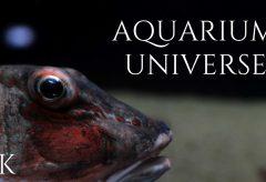 【Views】1529『Aquarium Universe』5分5秒
