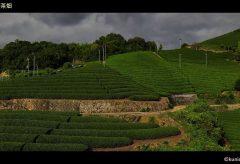 【Views】1534『茶源郷-京都府和束町』3分44秒