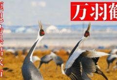【Views】1624『出水IZUMIの万羽鶴-2021-』5分59秒