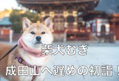 【Views】1639『柴犬と遅めの初詣』5分10秒