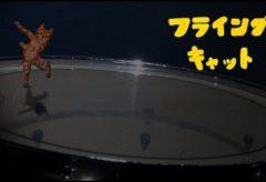 【Views】1645『フライングキャット』1分53秒