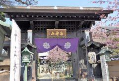 【Views】1647『密蔵院 In spring』2分55秒